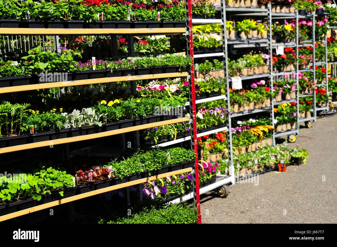 Flower Garden Sale