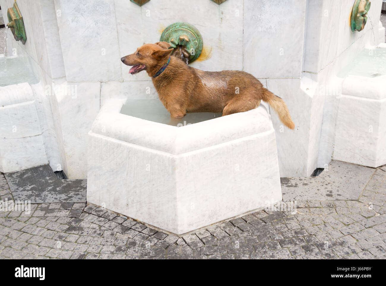 Wet dog in the fountain cooling down on hot summer day - Stock Image
