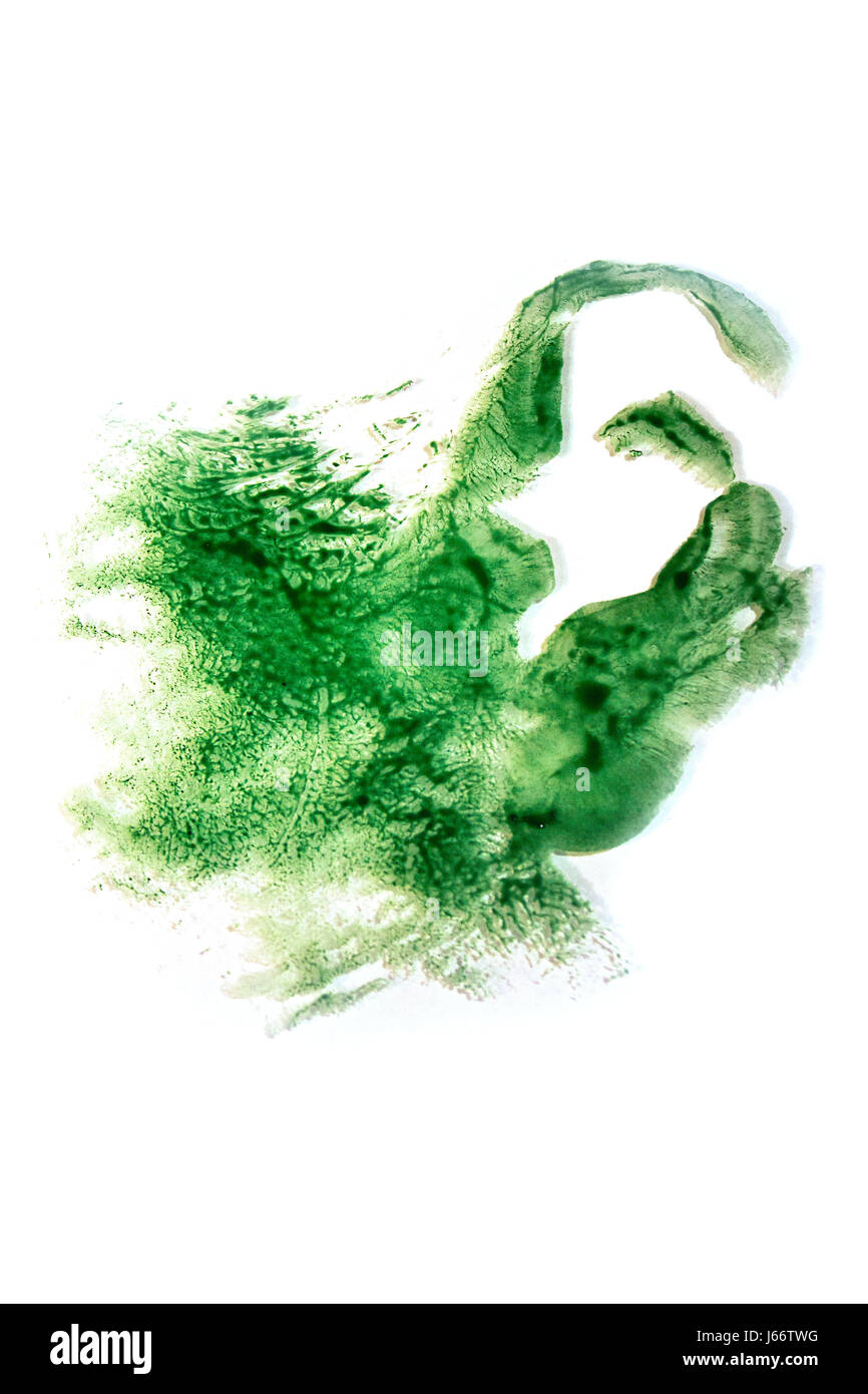 An abstract print of a human ear onto glass using natural green watercolour paints. - Stock Image