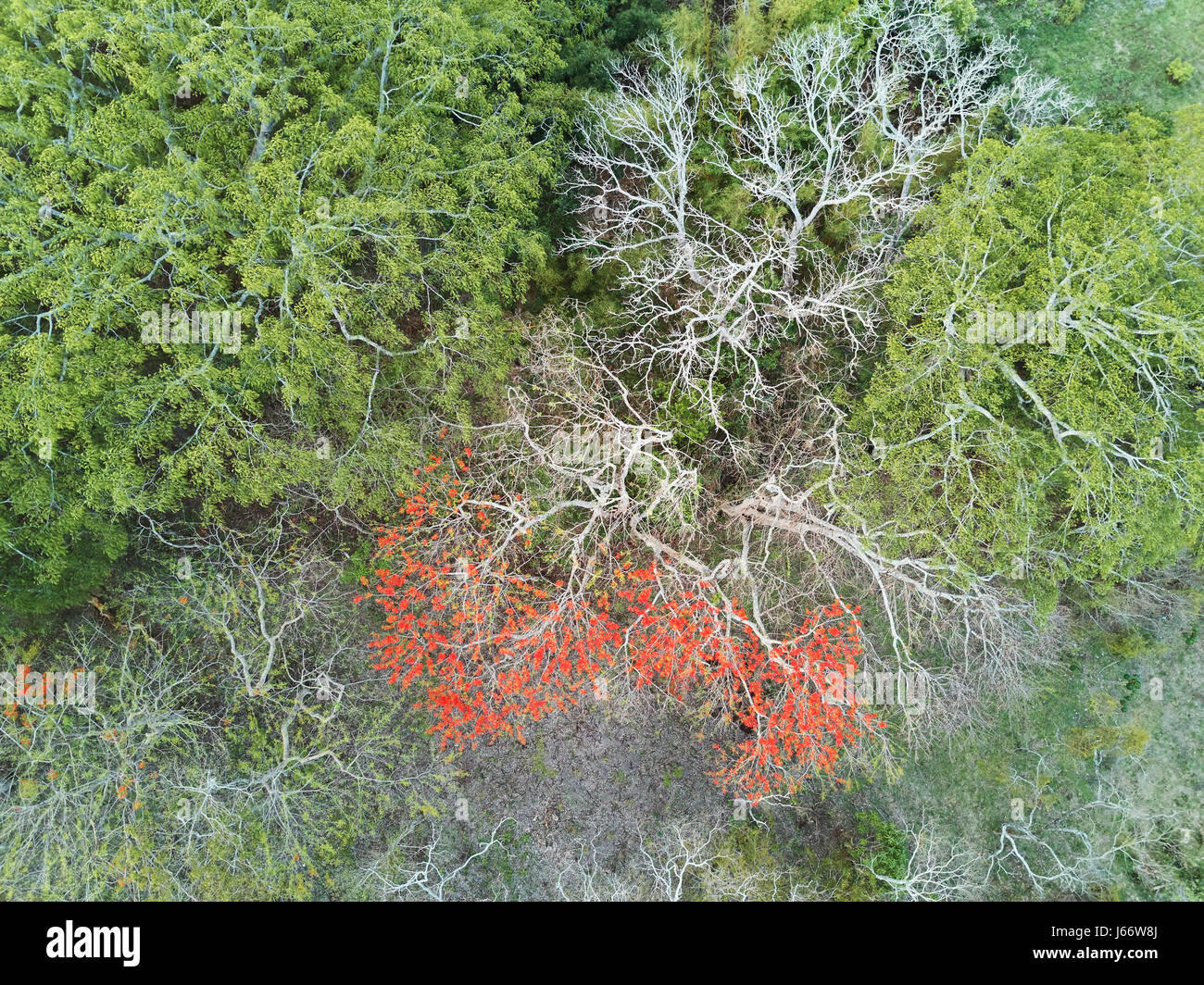 Red Leafs Tree In Green Forest Aerial View Above Drone Nature Photography
