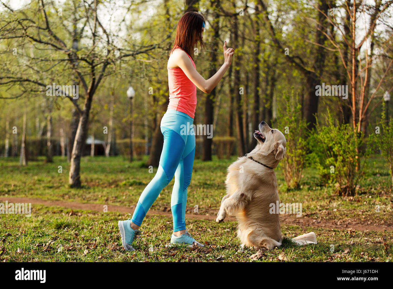 Labrador performs commands of girl - Stock Image