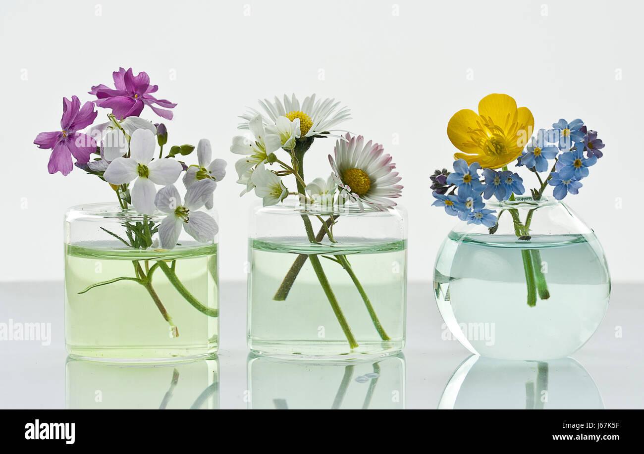Drei Niedliche Blumenvasen   Stock Image