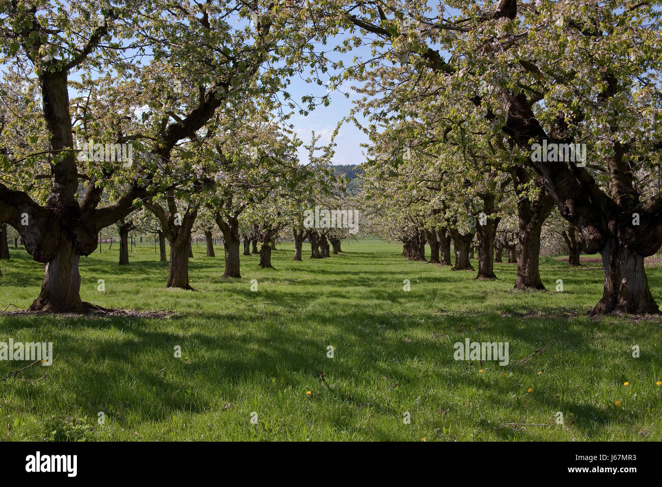 fruit productions - Stock Image