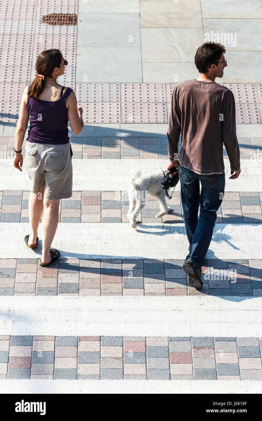 Two adults and a dog on a pedestrian crossing, seen from above - Stock Image