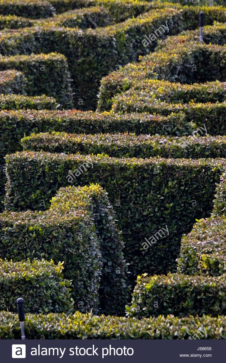 bushes shrub parkway hedge labyrinth maze path way park garden plant bushes Stock Photo