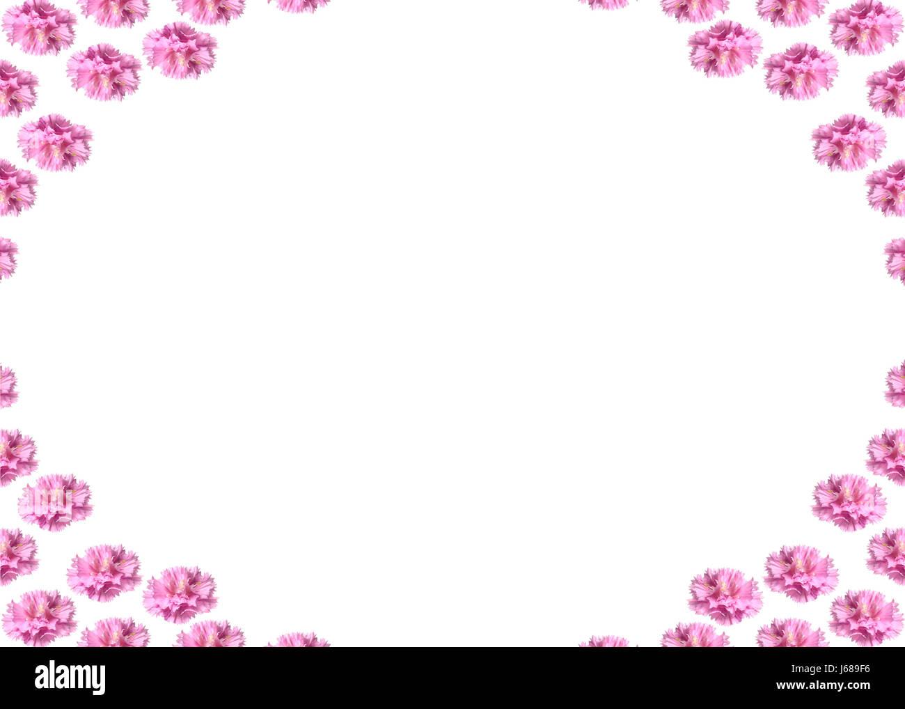 flower flowers plant frame birthday backdrop background white Stock ...
