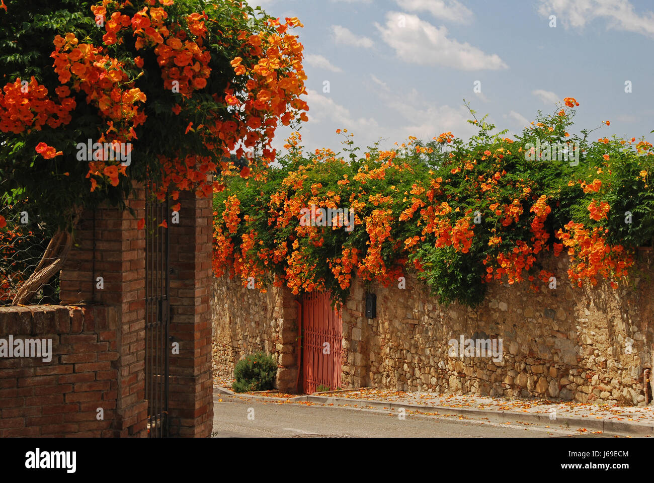 goal passage gate archgway gantry blossoms wall tuscany toscana bleed firmament Stock Photo
