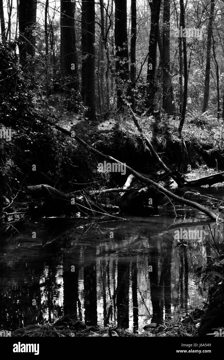 Creek - Stock Image