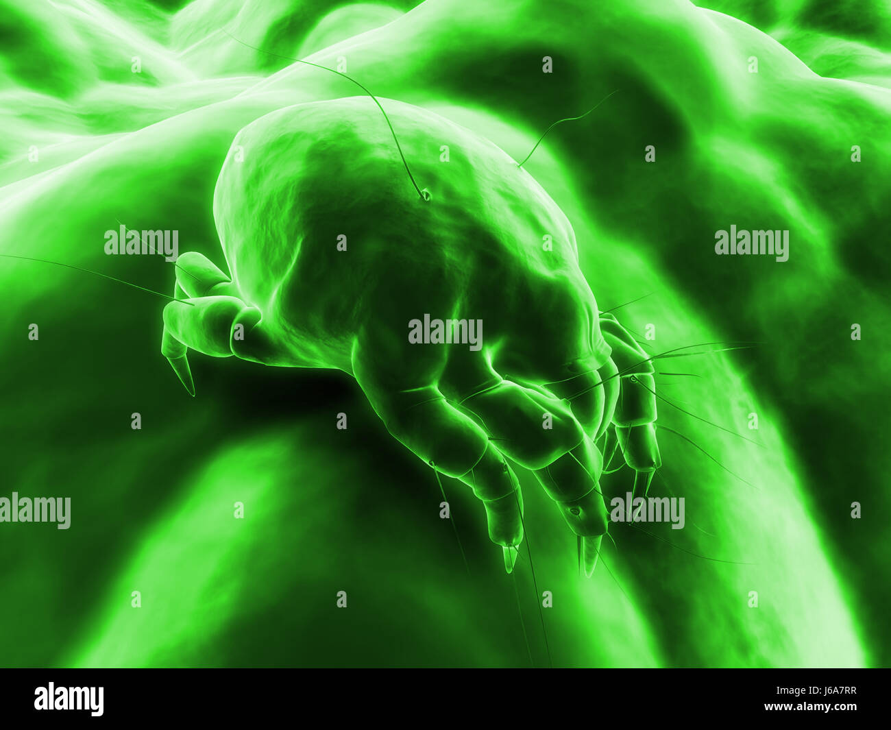 dust dusty hygiene allergy mite insect bed dirty bug bite micro electron marco - Stock Image