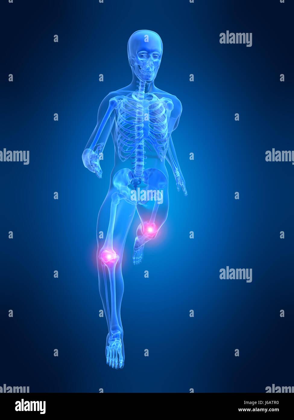 Medicinally Medical Human Human Being Skeleton Joints Anatomy Bones
