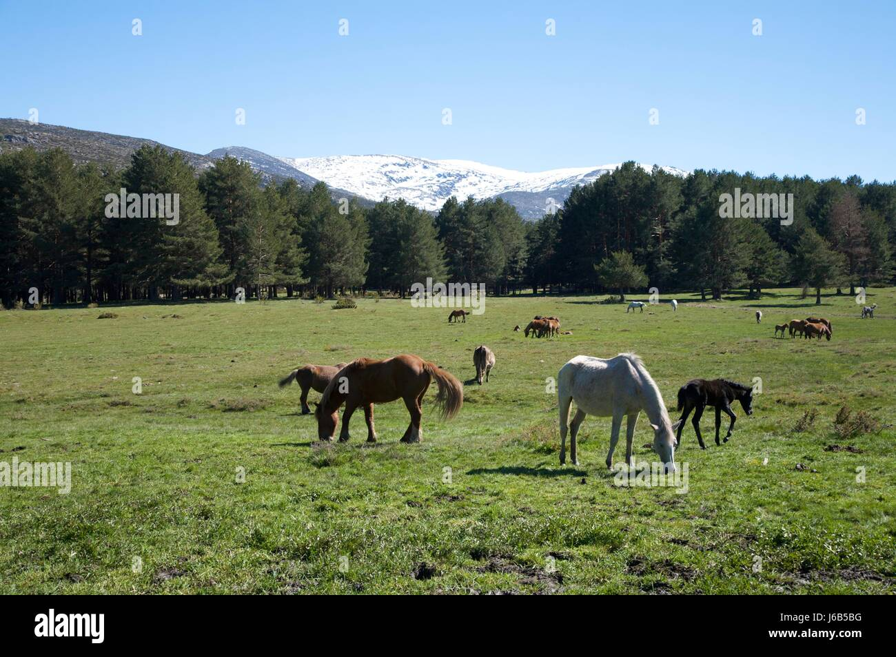 Horse Animal Spain Wildlife Landscape Scenery Countryside