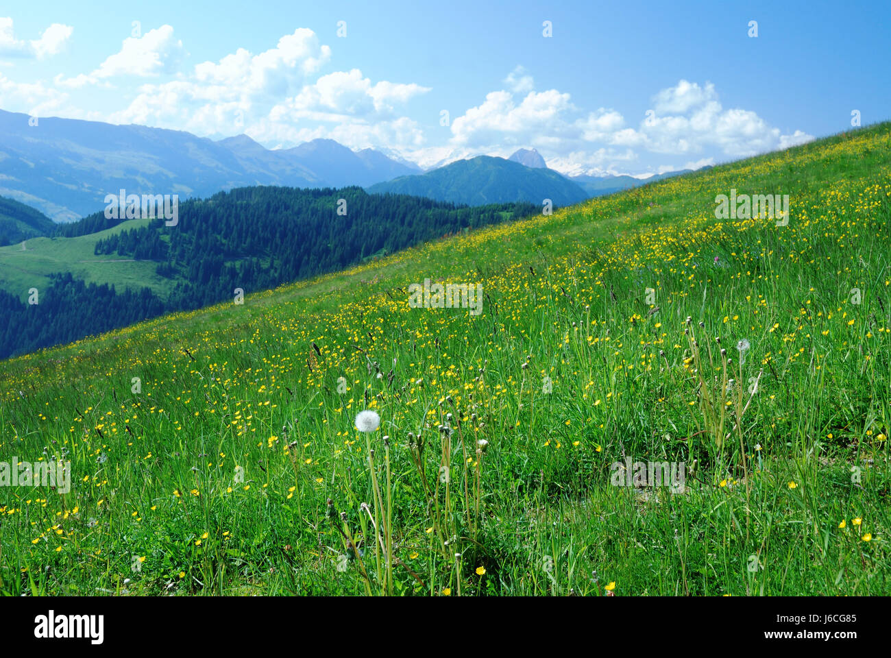 hill austria idyll high country mountain scenery countryside nature meadow - Stock Image
