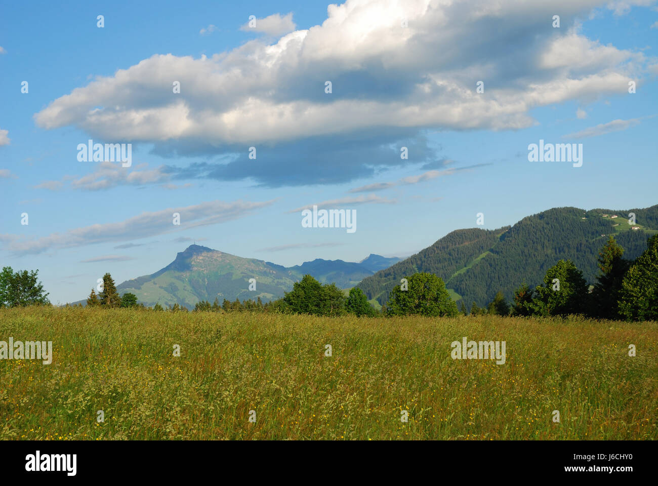 hill mountains austria idyll high country scenery countryside nature meadow - Stock Image