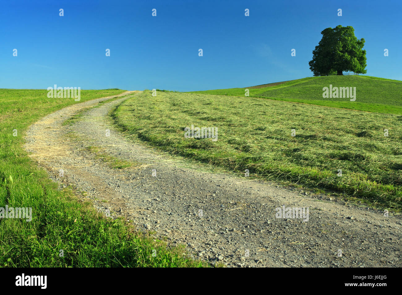 tree one country pasture landscape scenery countryside nature road meadow - Stock Image