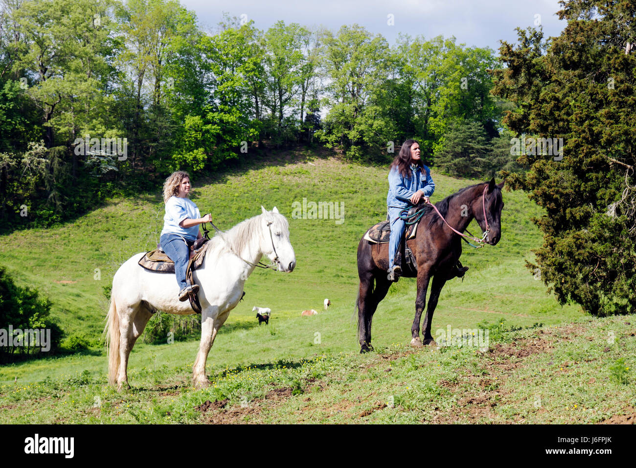Tennessee Sevierville Five Oaks Riding Stables - Stock Image