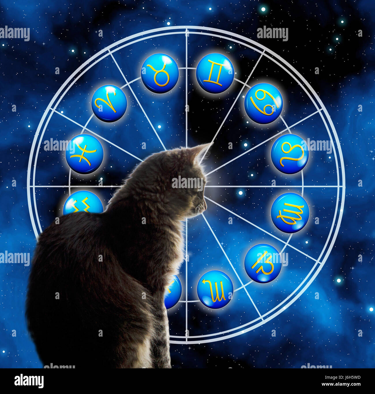 cat and astrology wheel with all zodiac signs - Stock Image