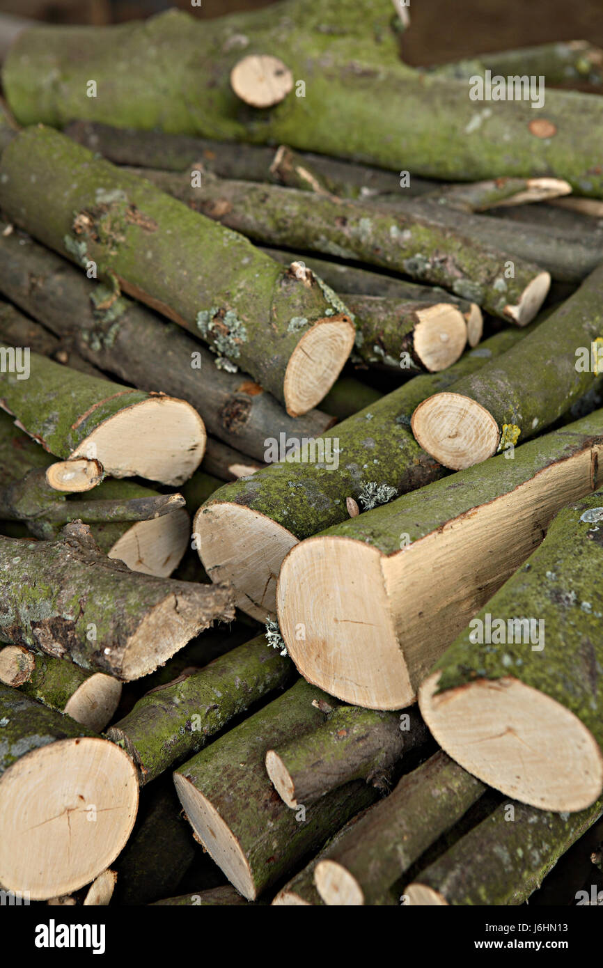 tree trees wood branches saw cut plants set manufacture preparations logs bark - Stock Image