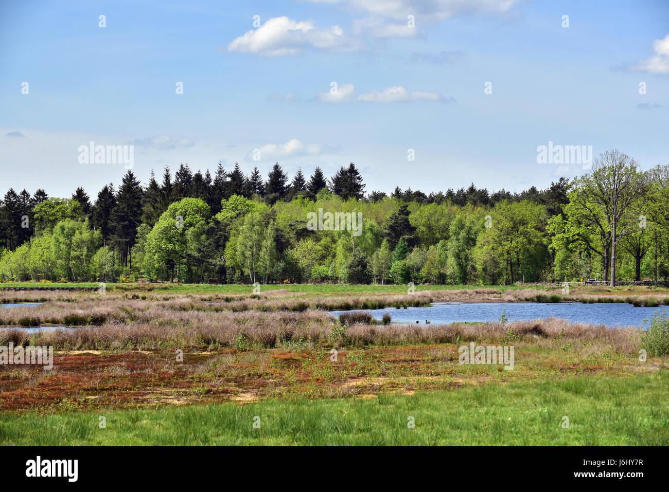 Springtime on Dwingelderveld National Park, Drenthe, The Netherlands - Stock Image