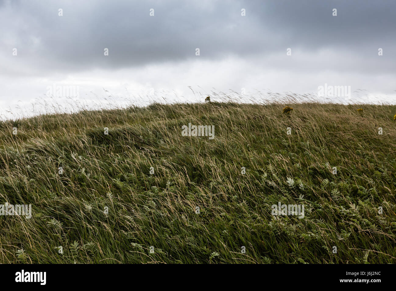 Meadows near the Cliffs of Moher in Ireland - Stock Image