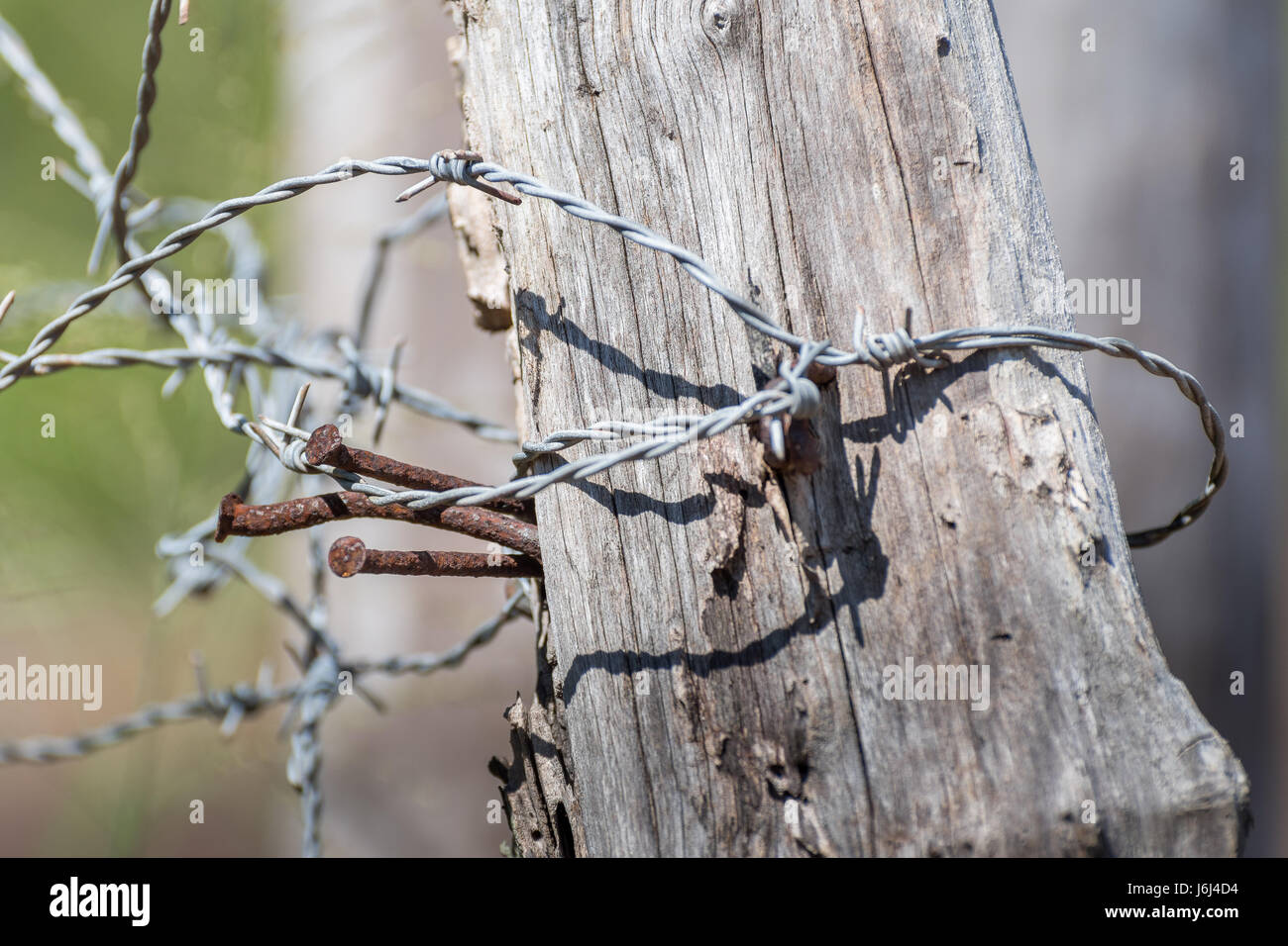 Barbed Wire Fence Post Up Close - Stock Image