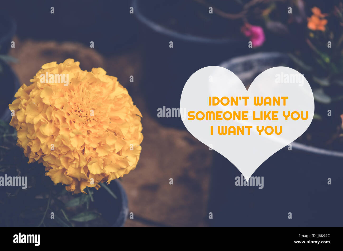 Love Quote In Heart With Yellow Flower Background Idont Want Stock
