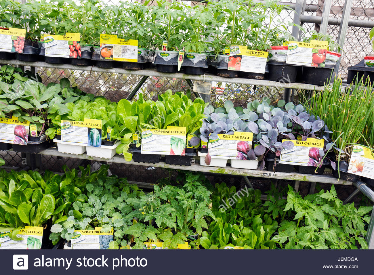 Great Miami Hialeah Florida Wal Mart Walmart Shopping Garden Center Plants For  Sale Amazing Design