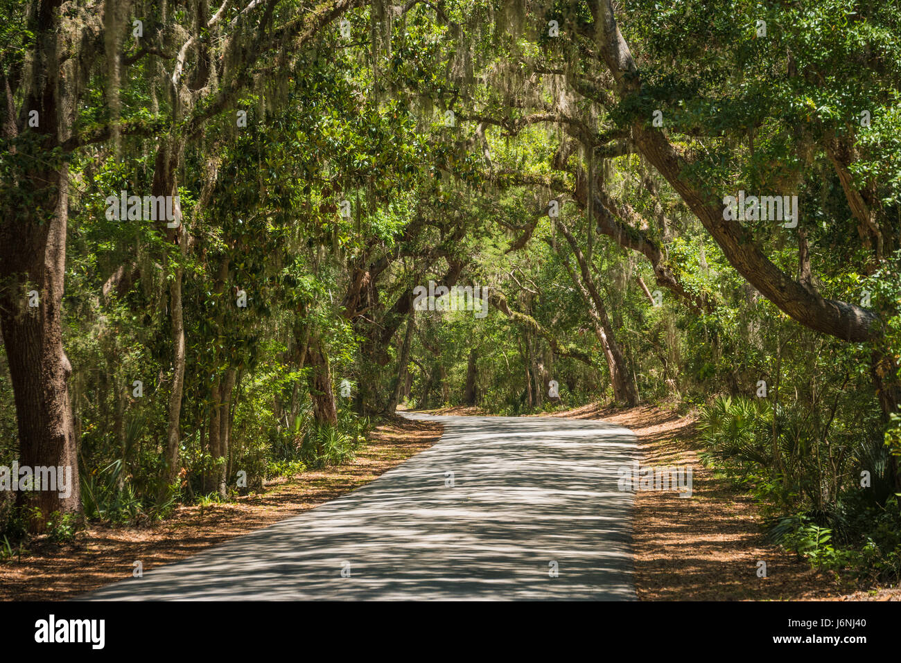 Florida oaks and Spanish moss provide a canopy for the tree-covered road to Fort Clinch on Amelia Island in Fernandina - Stock Image