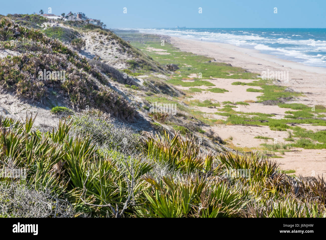 Dune line along the beach at Guana River State Park in Ponte Vedra Beach, Florida. (USA) - Stock Image
