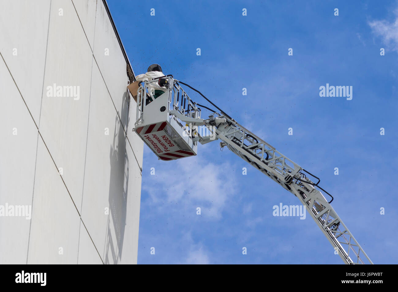 Beekeeper on an aerial platform capturing a bee swarm on a wall. Many bees flying around. - Stock Image