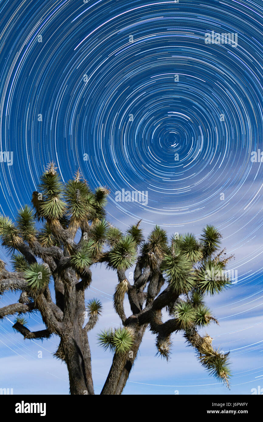 Circular star trails at Joshua Tree National Park in the spring night sky with clouds and moonlight illuminating - Stock Image