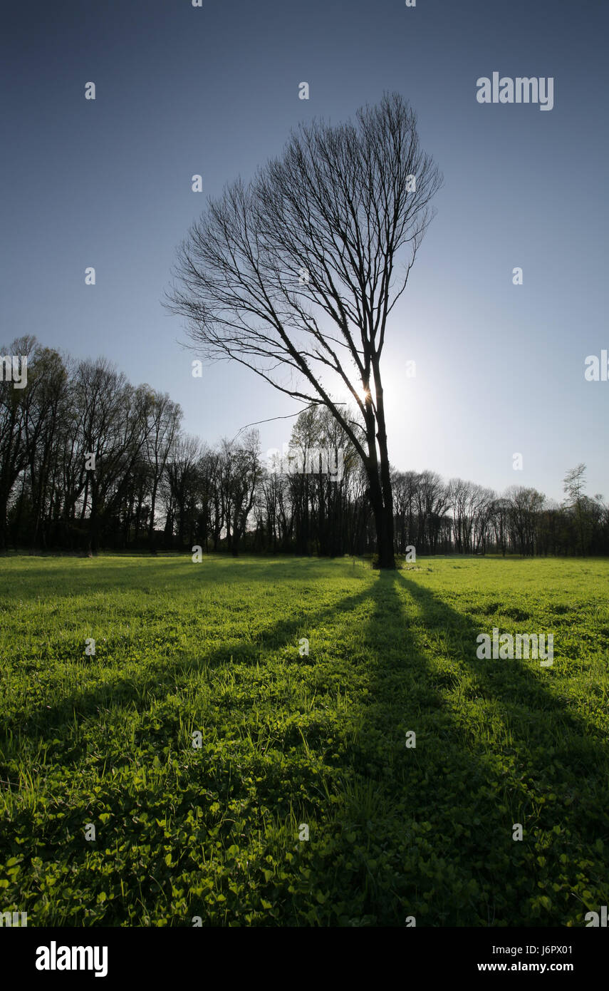 tree park counter-light meadow shaddow shadow shine shines bright lucent light - Stock Image