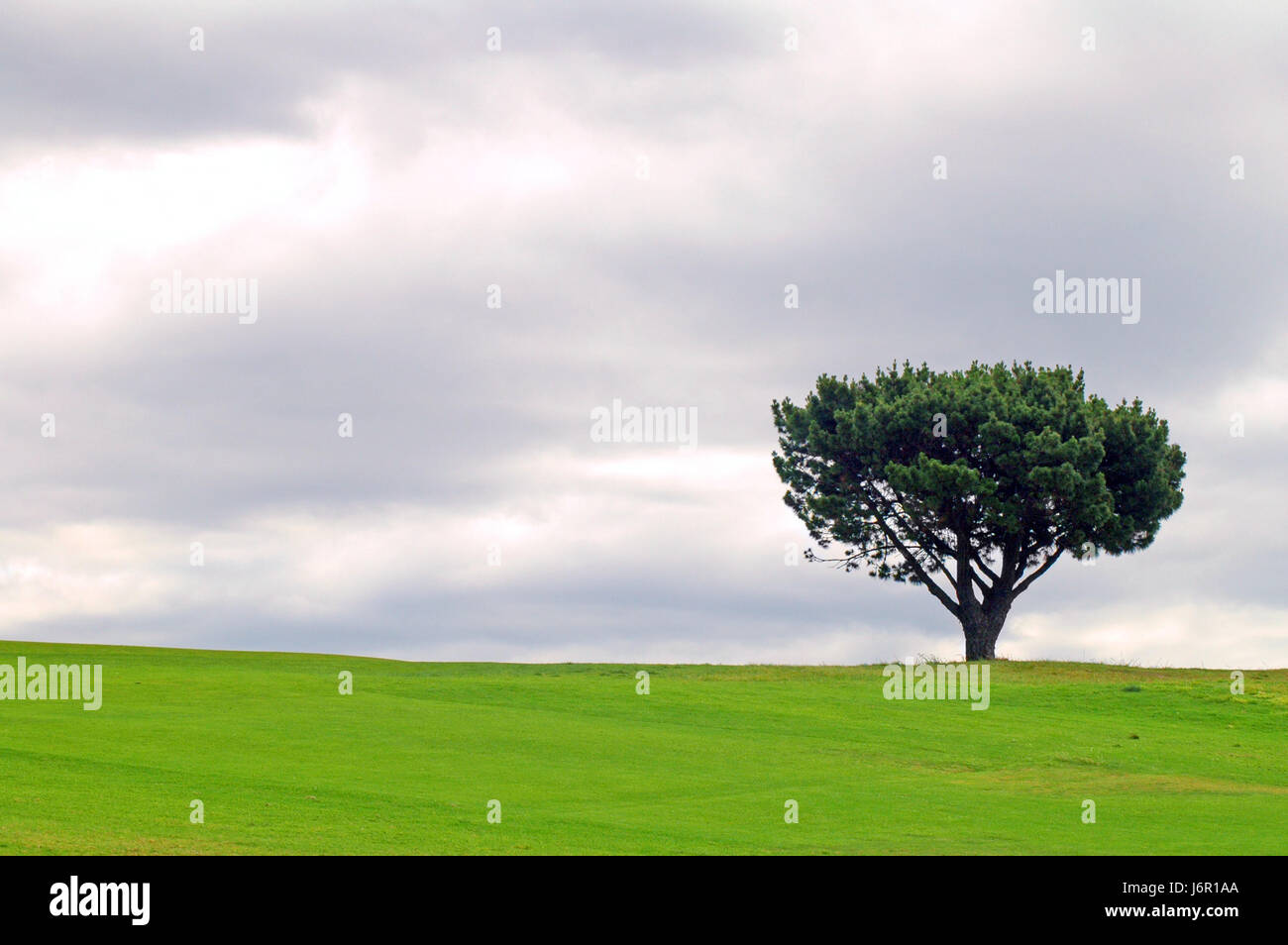 tree summer summerly solitary one country scenery countryside nature single - Stock Image