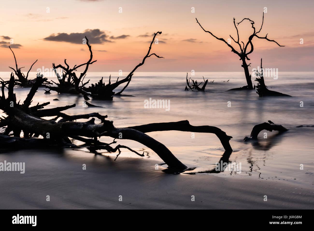 Sunrise over the Boneyard Beach on Bulls Island, South Carolina. Bulls Island is an uninhabited Sea Island 3 miles - Stock Image