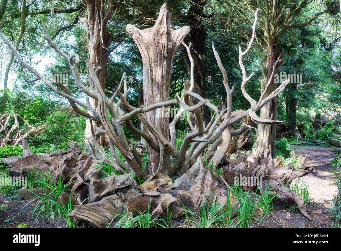 Enchanting tree stumpery in a formal English garden - Stock Image