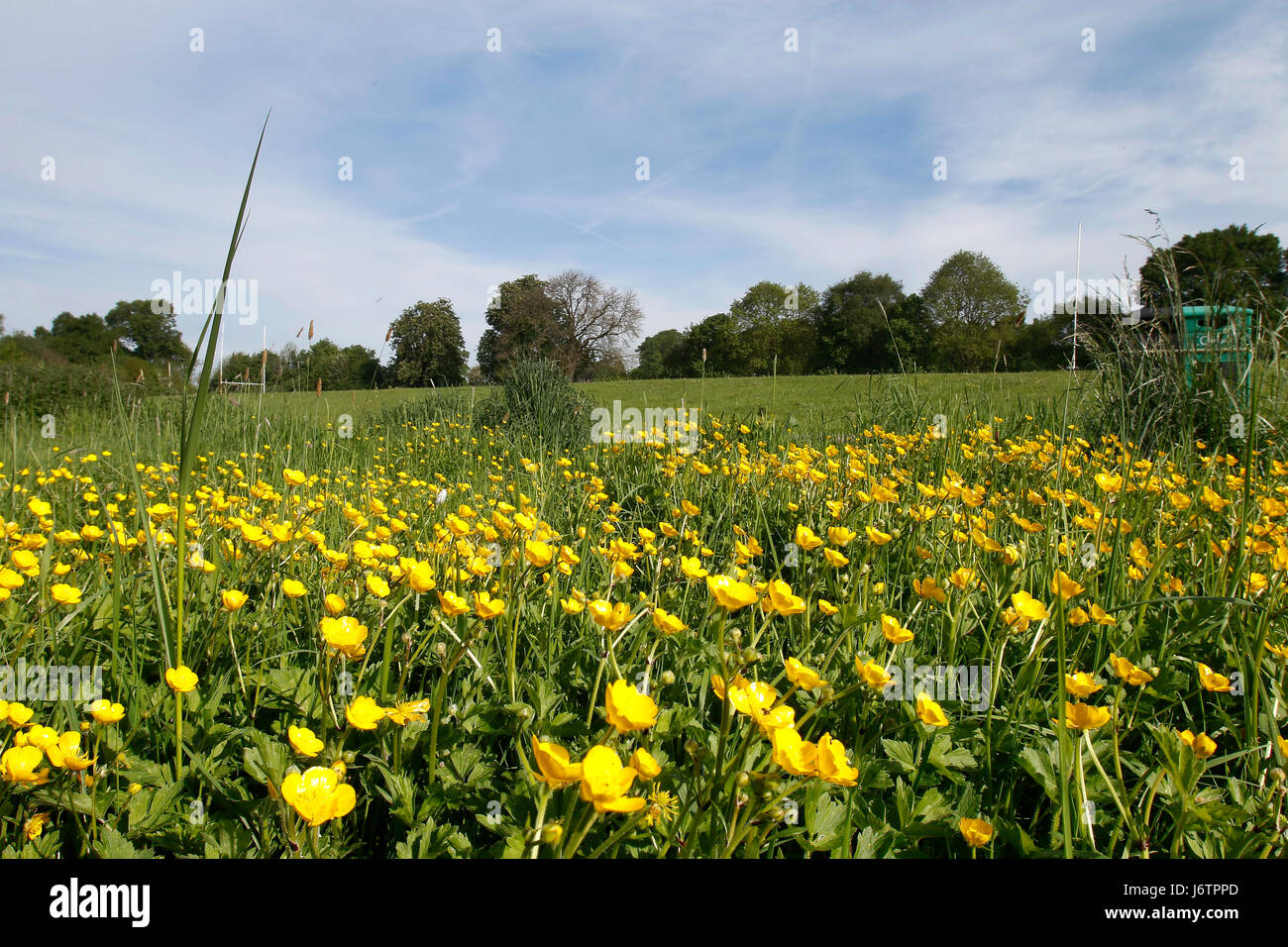 Uttoxeter, Staffordshire. 22nd May 2017. Flowers blooming at the start of a week-long heat-wave in Uttoxeter, Staffordshire. - Stock Image