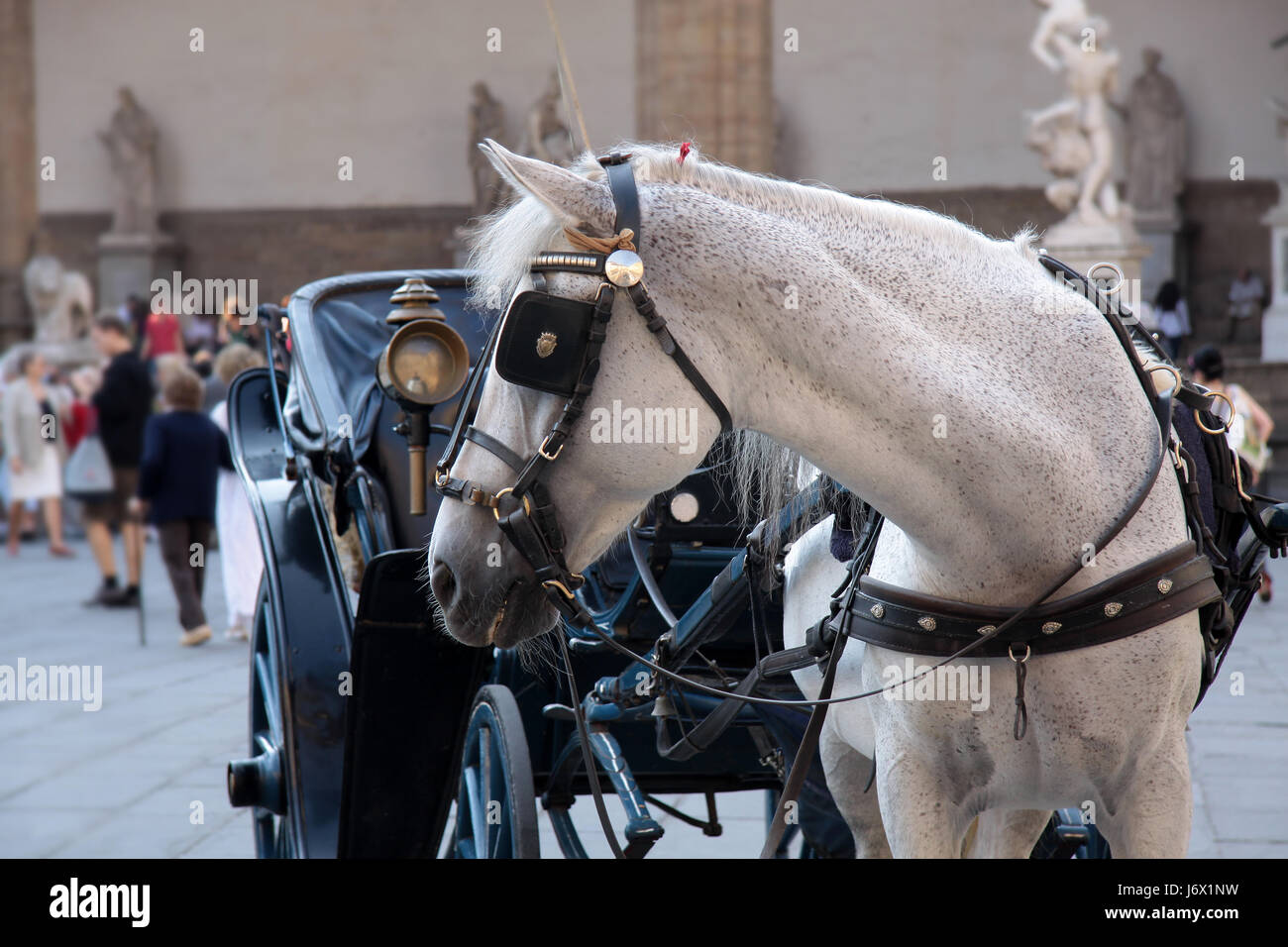 horse carriage on piazza della signoria - Stock Image