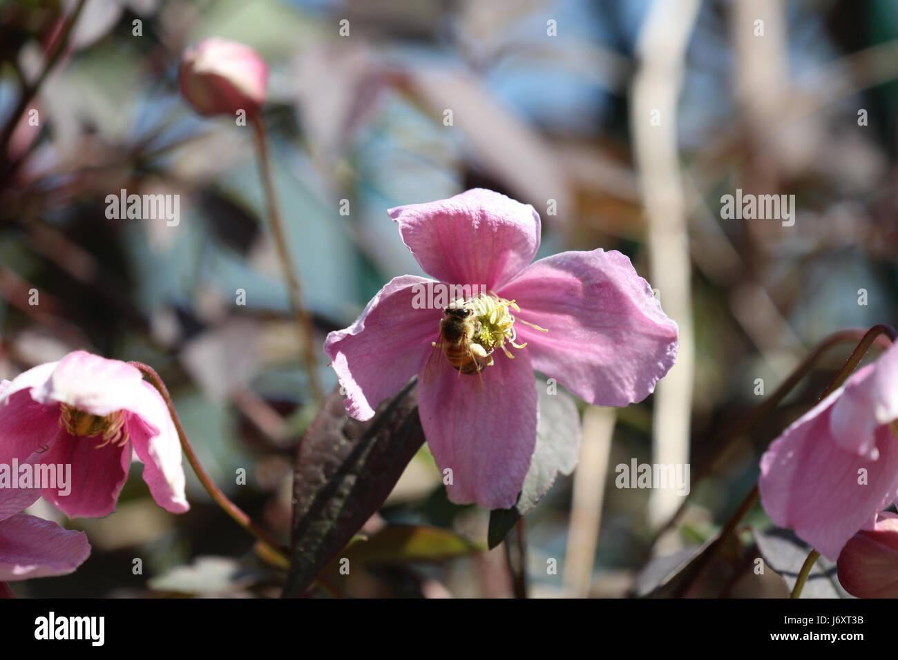 Blume mit Insekt - Stock Image