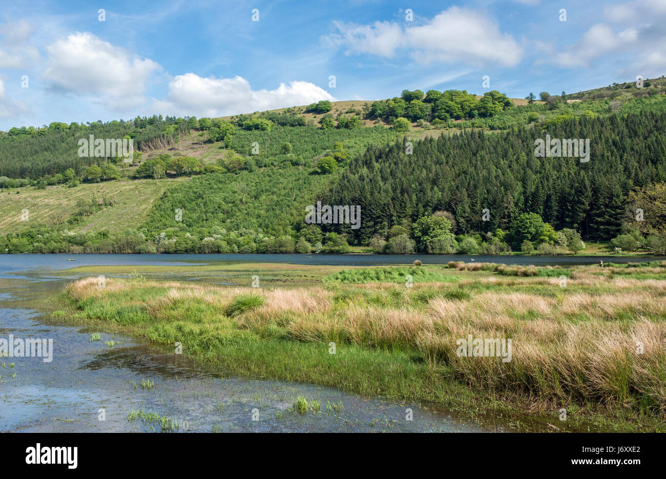 Talybont Reservoir Nature Reserve Brecon Beacons National Park Wales - Stock Image