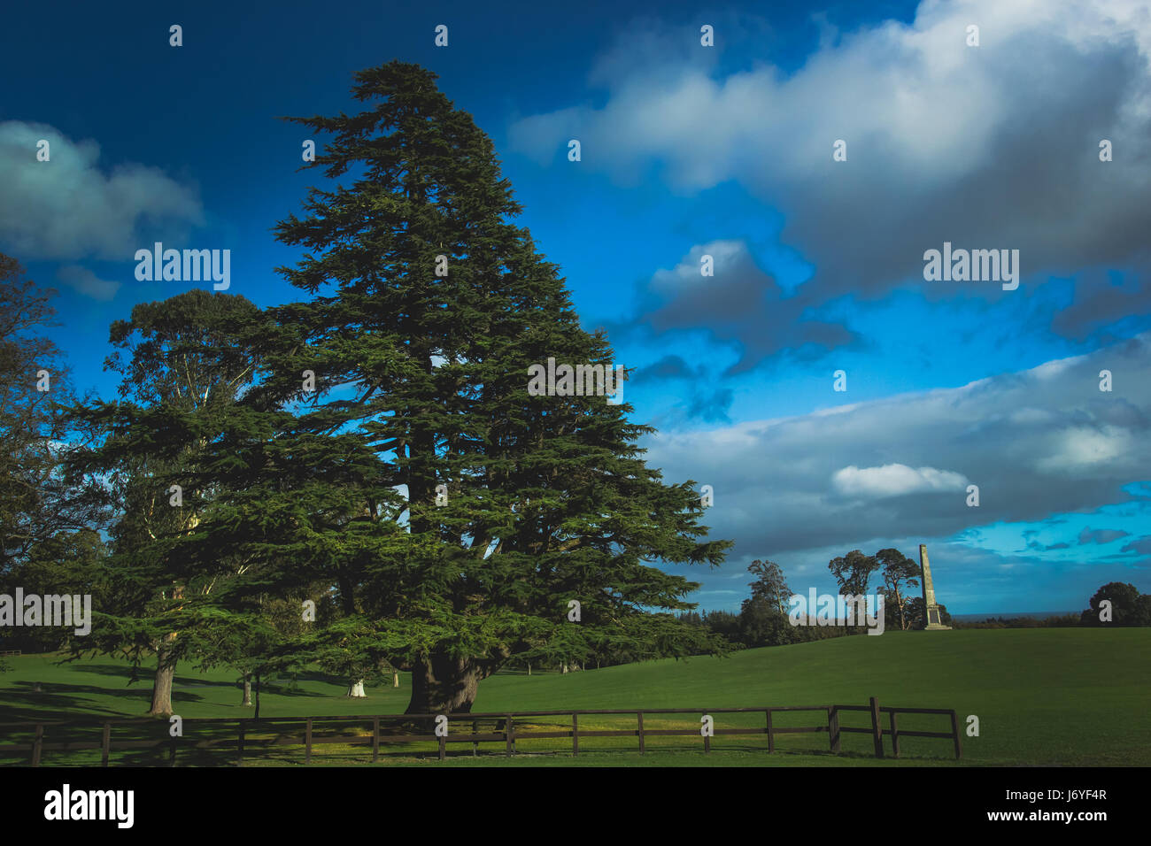 beautiful view of a green grassy meadow with a himalyan cedar tree on the foreground​ and a small monument in the - Stock Image