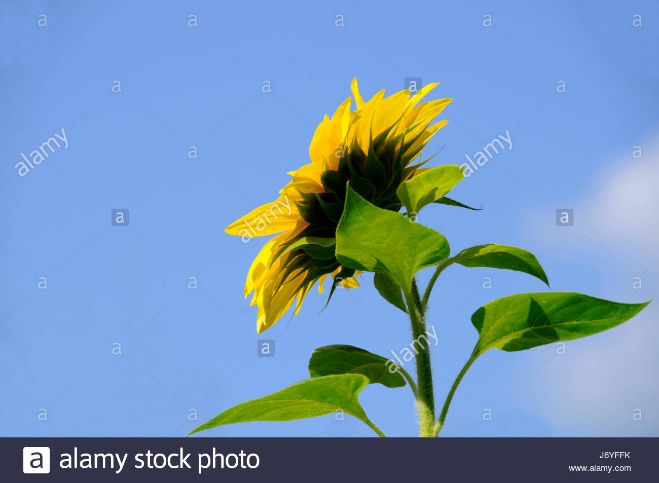 sunbather - Stock Image