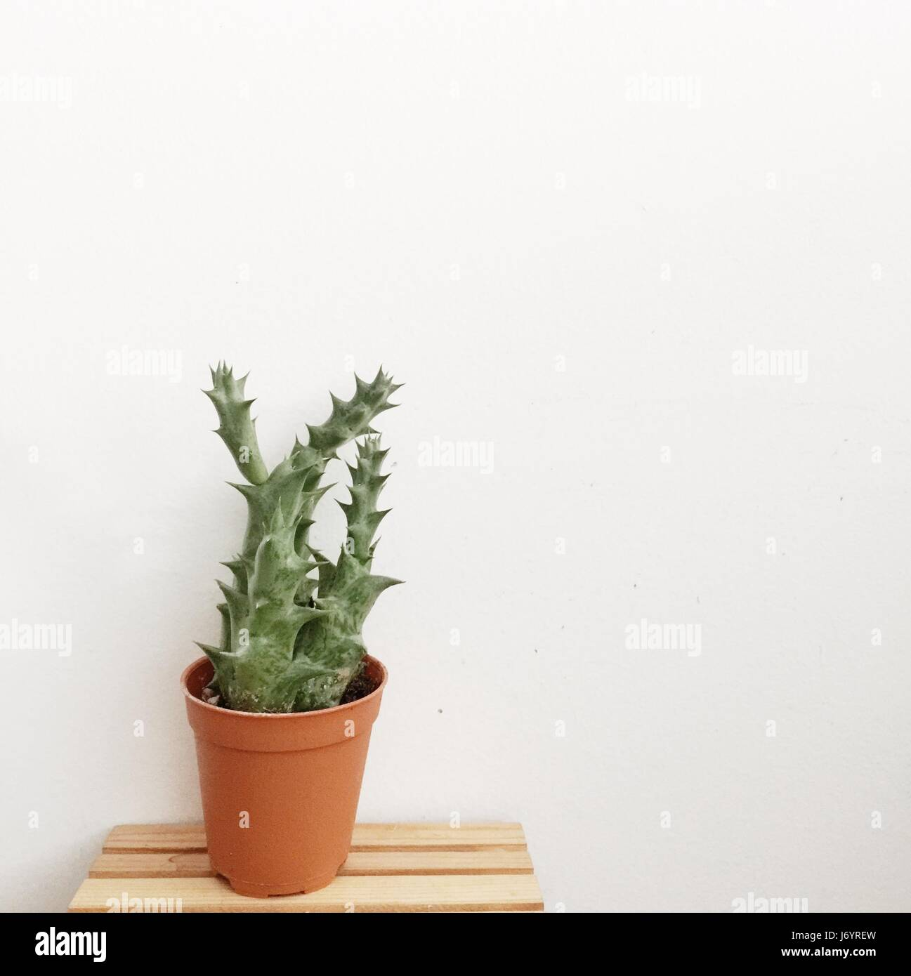 Cactus in a plant pot on wooden table Stock Photo