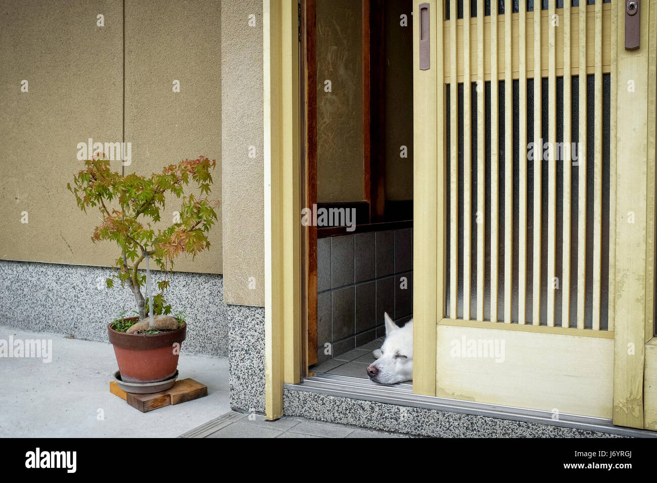 A dog sleeping in the doorway of a Japanese house. - Stock Image