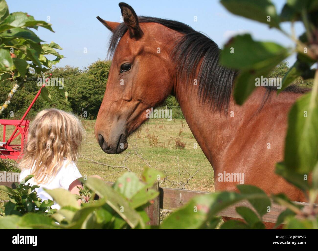 Little girl talking to a bay horse - Stock Image