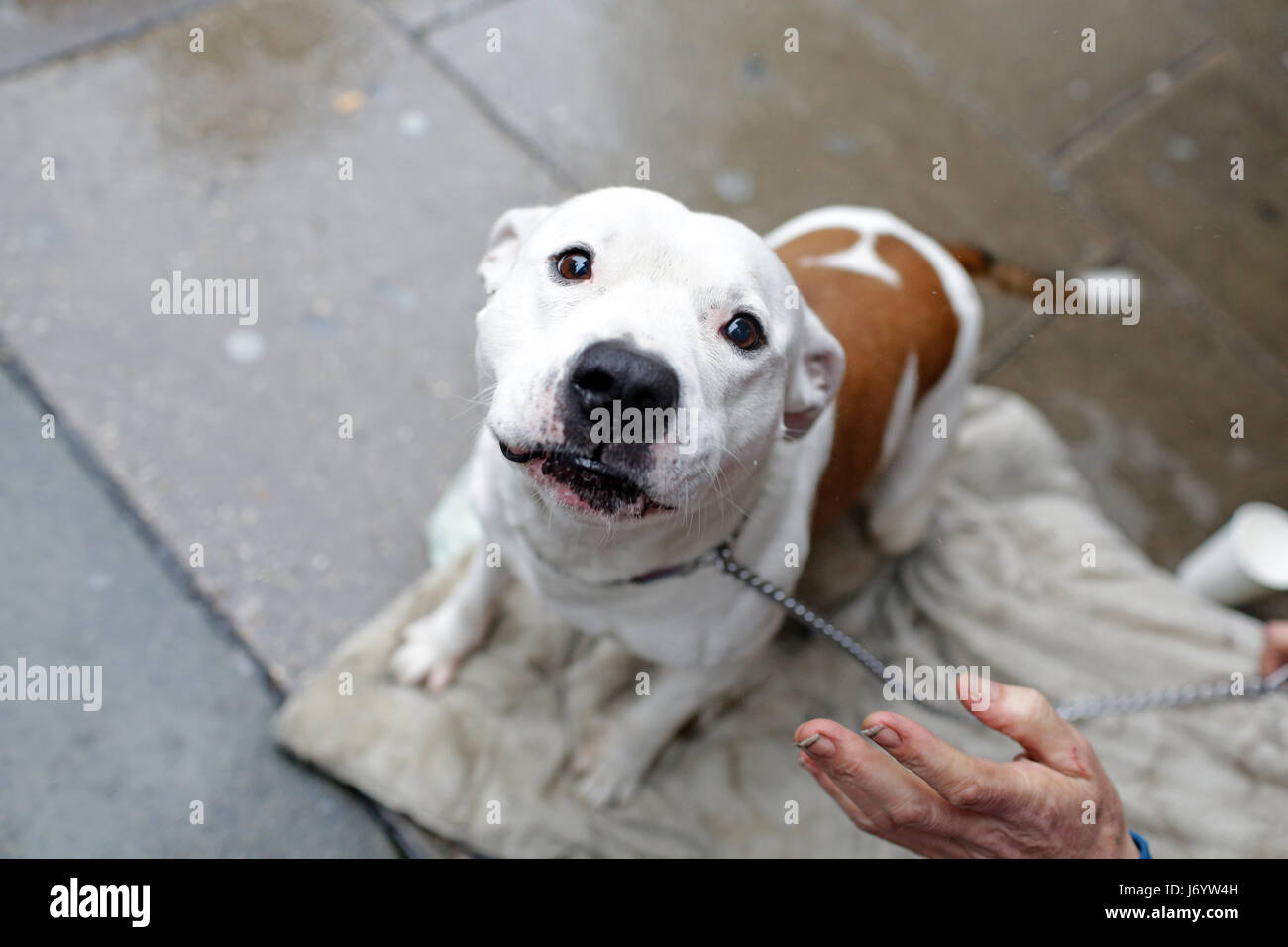 Homeless persons dog - Stock Image