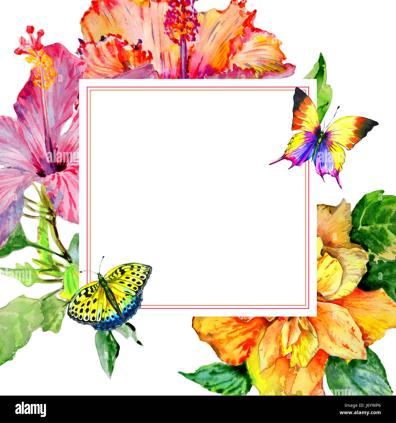 Wildflower Hibiscus Flower Frame In A Watercolor Style Isolated Aquarelle Wild For Background Texture Wrapper Pattern Or Border