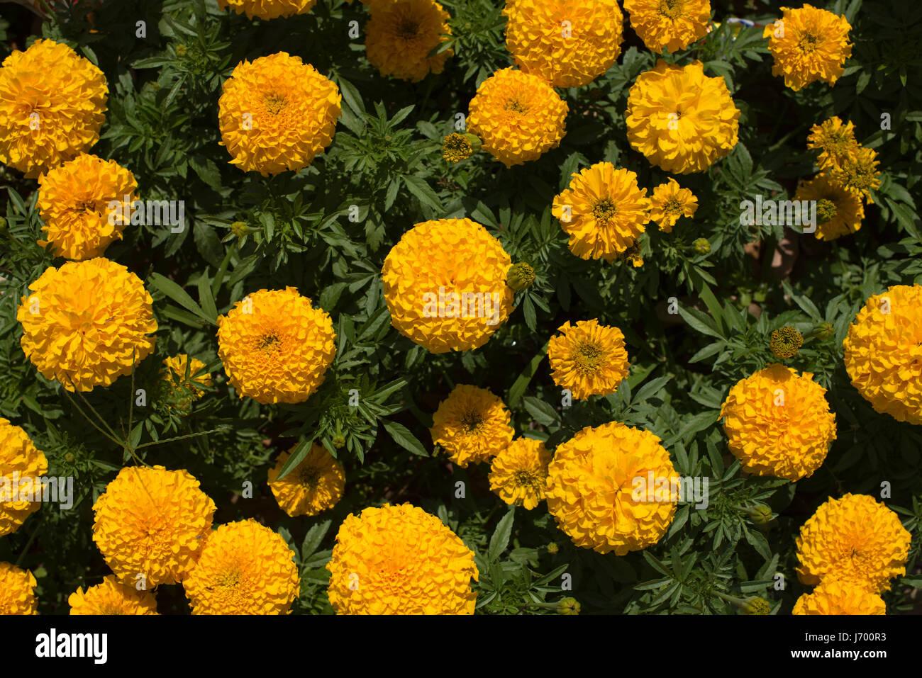 spring - Stock Image