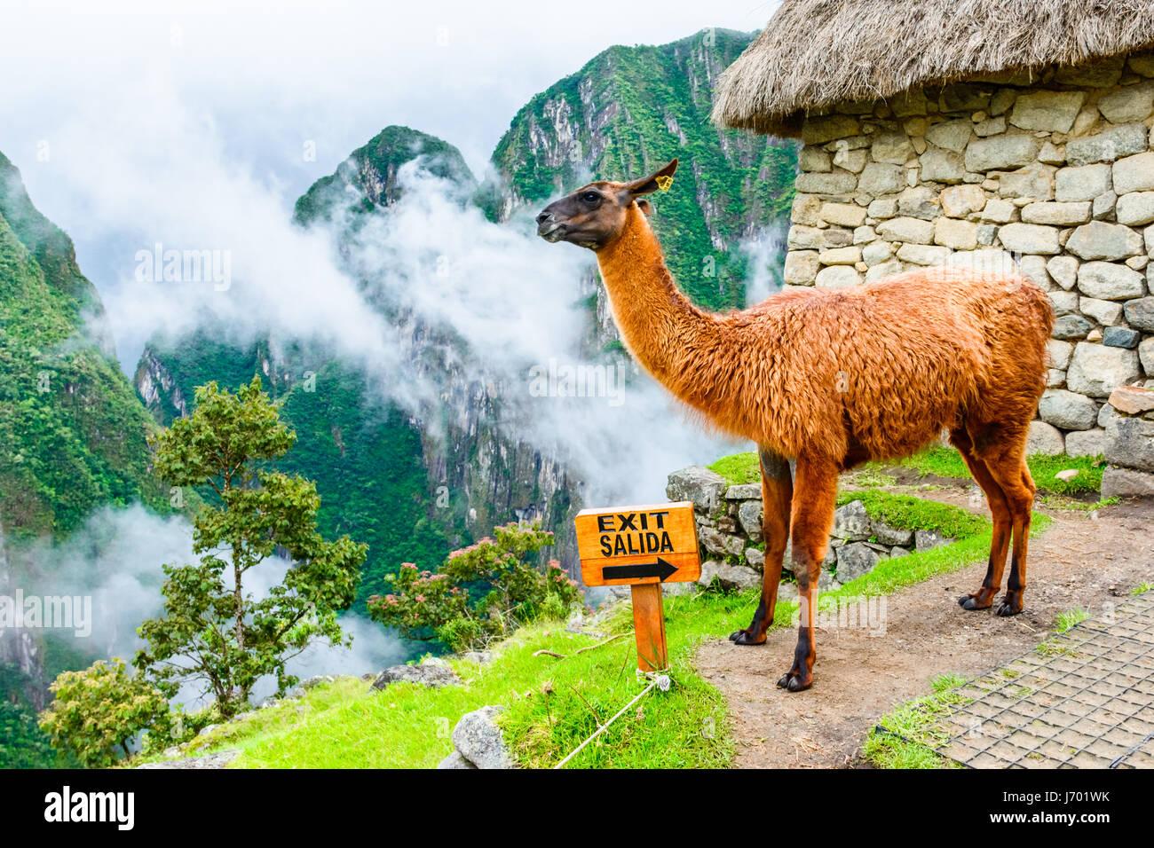 Machu Picchu, Incas ruins in the peruvian Andes at Cuzco Peru - Stock Image