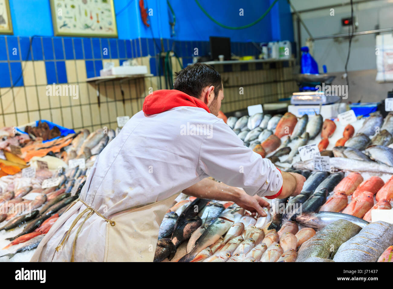 Fish monger arranging fresh fish on ice, displayed for sale - Stock Image