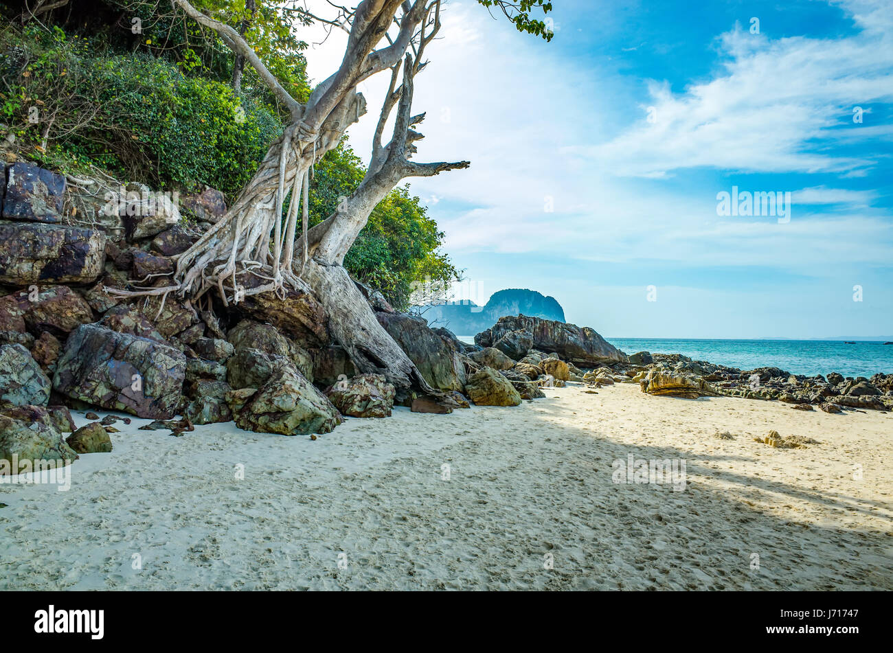 Wood and stones on the beach Phuket, Thailand - Stock Image
