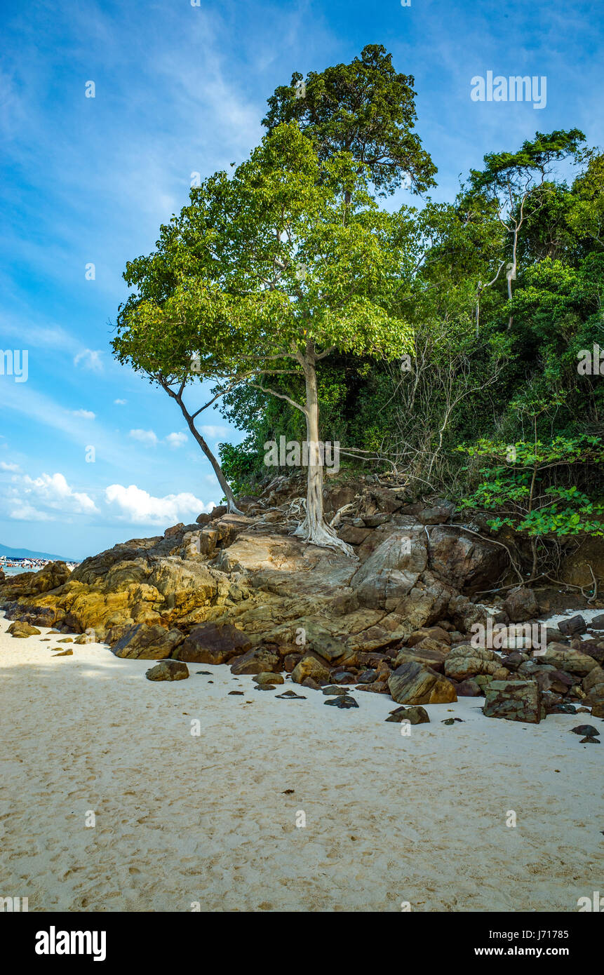 Tree by the sea and beach in Phuket, Thailand - Stock Image